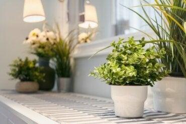 Догляд за кімнатними рослинами: 9 корисних порад