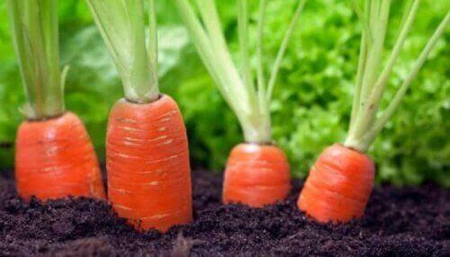 які є переваги моркви