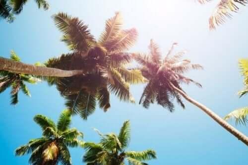 як роблять кокосовий оцет