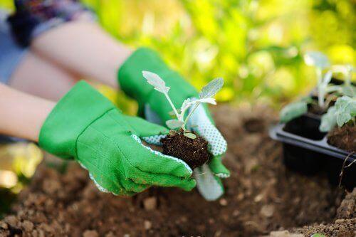 Як правильно пересадити рослини