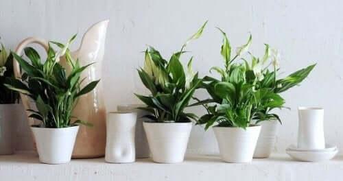 правильний догляд за кімнатними рослинами