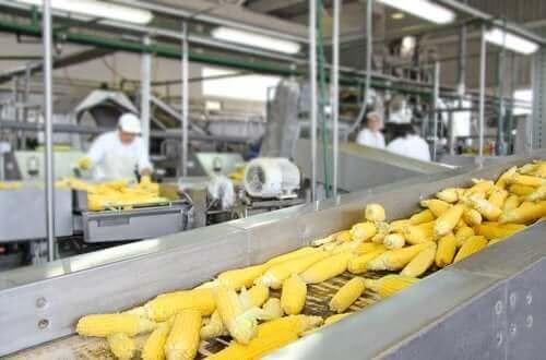 Як обробка їжі впливає на харчову цінність продуктів