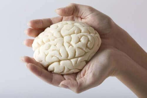 як розділені долі мозку