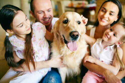 стосунки дитини з домашнім улюбленцем