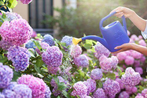 бузок для невеликого саду