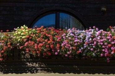 Ароматні квіти для невеликого саду