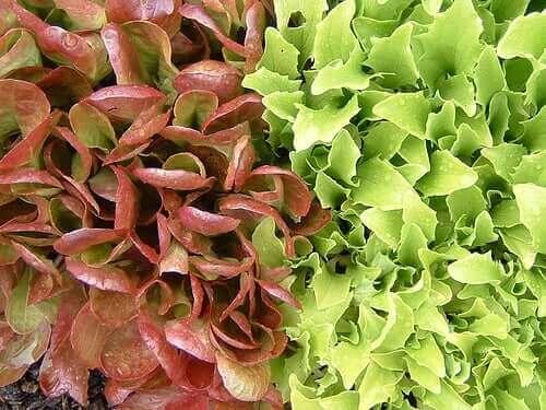 """салат """"літнє диво"""""""