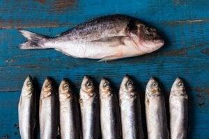 Переваги блакитної риби