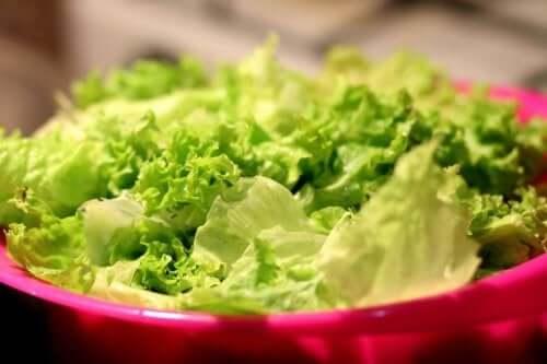 сорти салата для вирощування на городі