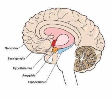 Атетоз - захворювання опорно-рухового апарату