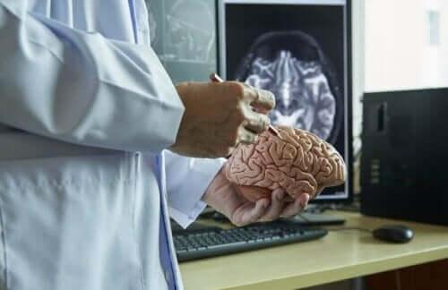 які є мозкові оболонки