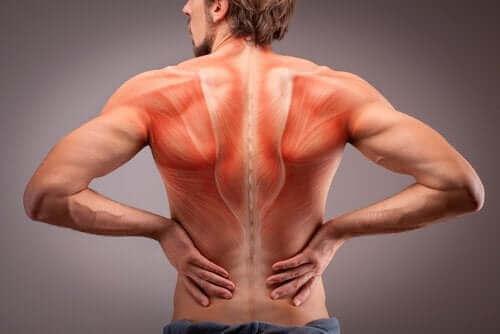 Анатомія м'язів спини