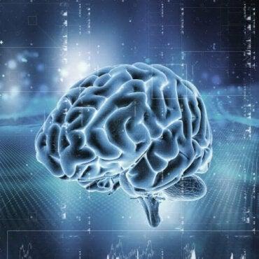 Як працює система винагород у мозку?