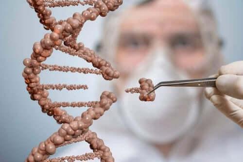 ДНК та стовбурові клітини